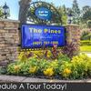 Pines at Monterey Photo Thumbnail